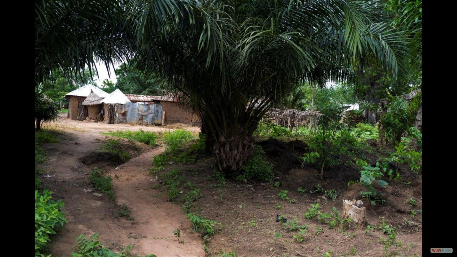 Houses of poor people in the neighborhood of the farm
